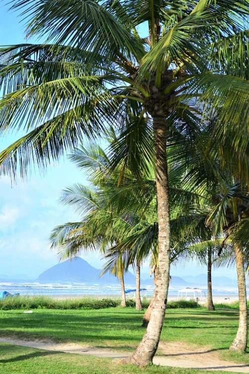 Coconut Tree Beach Sand Palm Tree Green Mar Water