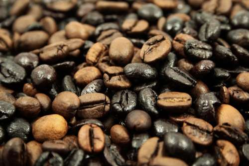 Coffee Beans Coffee Beans Roasting Roasted Morning