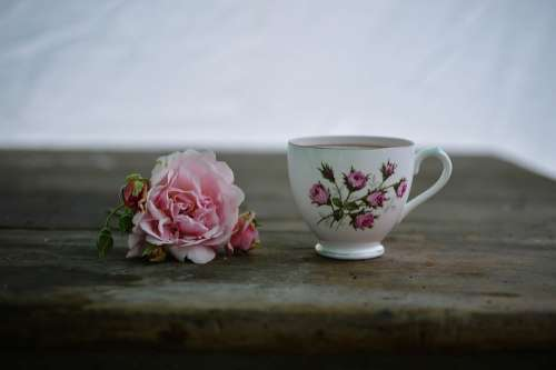 Coffee Cup Drink Flora Flower Hot Mug Table Tea