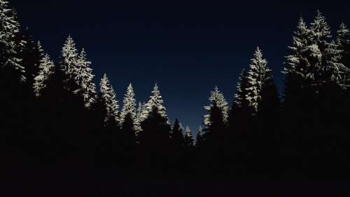 Cold Dark Forest Nature Night Silhouette Trees