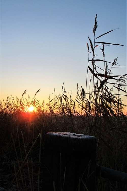 Cold Ripe Frozen Ice Winter Sun Leaves Landscape