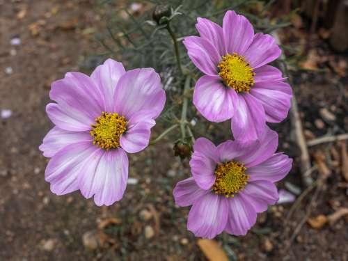 Color Exclusive Violet Magenta Flower Petal