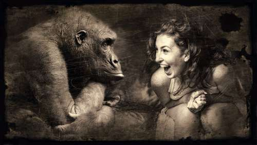 Composing Monkey Woman Laugh Sepia Brown Gorilla