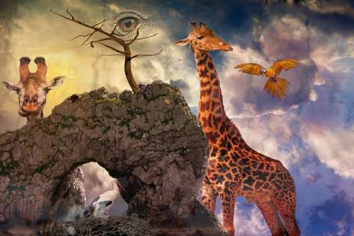 Composing Fantasy Mystical Photomontage Fairytale