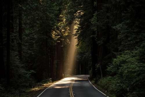 Conifer Daylight Evergreen Forest Highway