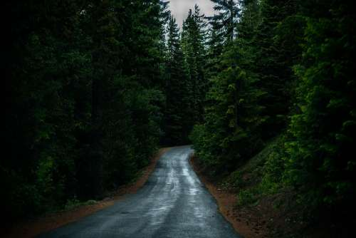 Conifer Evergreen Forest Landscape Outdoors Road