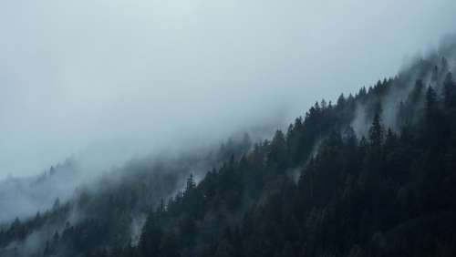 Conifers Dark Fir Trees Fog Foggy Forest Hazy