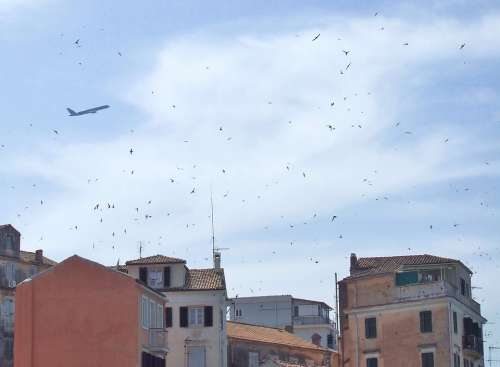 Corfu Town Skyline Old Town Swallows Birds Flying