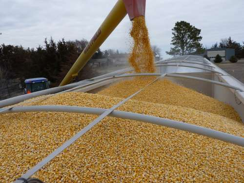 Corn Agriculture Loading Truck Vehicle