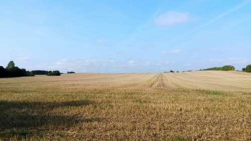 Corn Field Field Nyborg