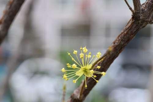 Cornus Spring Flowers Flowers Spring