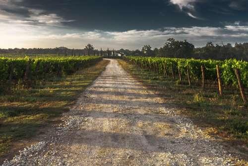 Country Lane Gravel Road Tuscany Way Path Grape