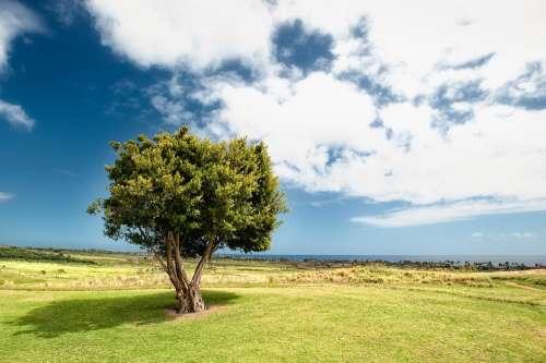 Countryside Tree Field Grass Idyllic Landscape