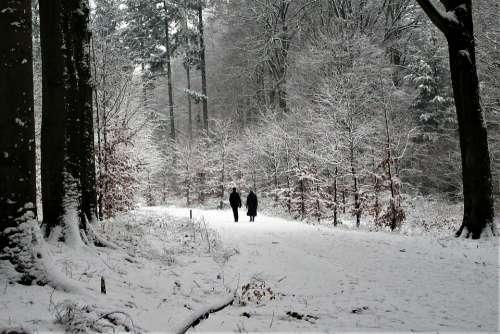 Couple Seniors Hiking Snow Forest Love Elderly