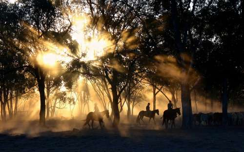 Cowboys Riding Sunset Silhouettes Sunlight Trees