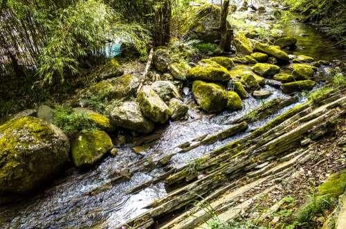 Creek Moss Fall Landscape Flow Brook Natural