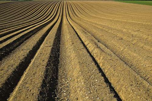 Crop Furrows Soil Seeds Preparation Prepared