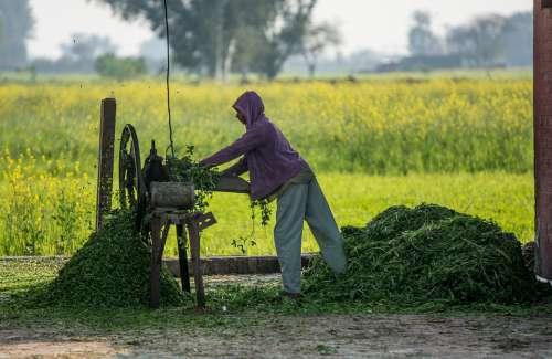 Cutter Labor Machine Work Tool Farm Farm Life