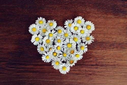 Daisy Heart Daisy Heart Love Heart Shaped Romantic