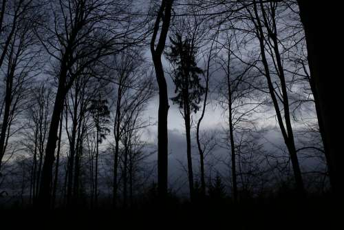 Dark Forrest Mysterious Horror Ancient Nature
