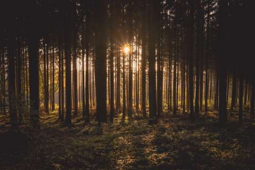 Dawn Forest Dusk Landscape Nature Outdoors