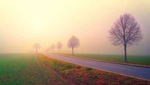 Dawn Road Fog Landscape Trees Nature Field