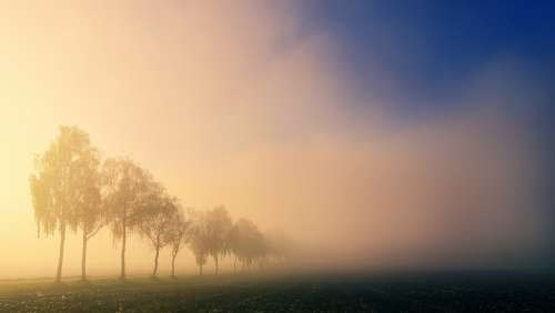 Dawn Light Trees Fog Landscape Nature Field