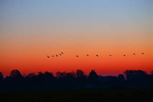 Dawn Sunrise Early Morning Skies Birds Silhouettes