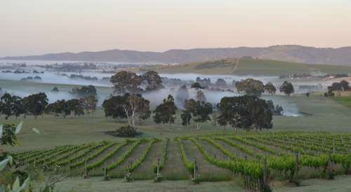 Dawn Mist Winery Valley Calm Quiet Peace