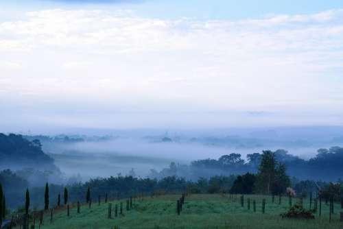 Dawn Morgenstimmung Fog Landscape Bushes