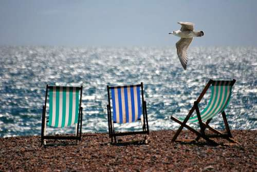 Deckchairs Sea Beach Seaside Seagull Summer