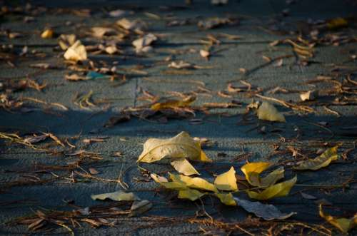 Defoliation The Leaves Ground Sunshine