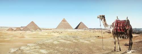 Desert Camel Sand Pyramid Dry Travel Pharaohs