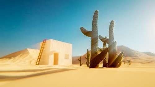 Desert Cactus Sand Dirt Collection Plants Nature