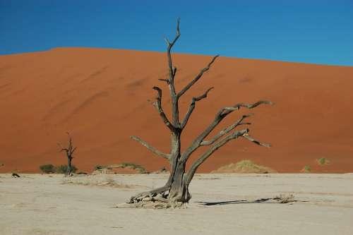 Desert Drought Sand Namibia Namib Desert