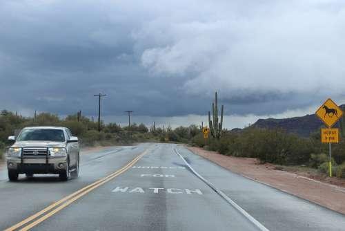 Desert Saguaro Cactus Weather Landscape Outdoors