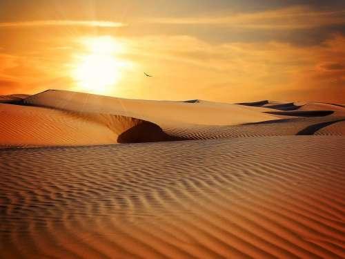 Desert Sand Landscape Sun Sunset Dry Adventure