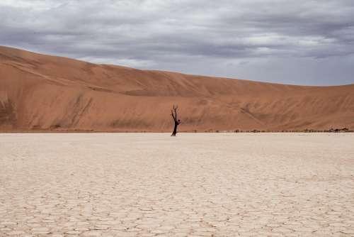 Desert Landscape Desert Landscape Cacti Red Dry