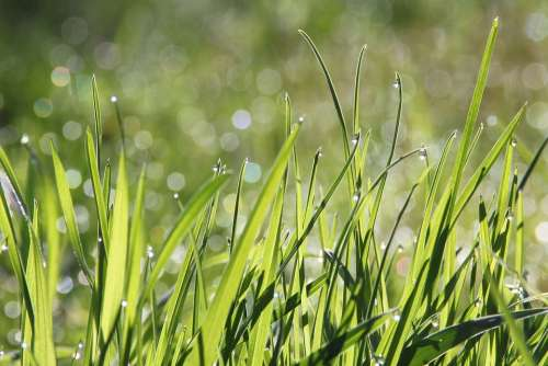 Dew Morning Meadow Bokeh Morgentau Drip Dewdrop