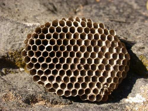 Diaper Wasps' Nest Exag Hex Natural Geometry Nest