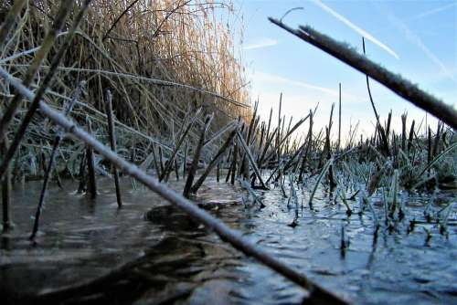 Ditch Reed Frozen Countryside Swampy Water Plants