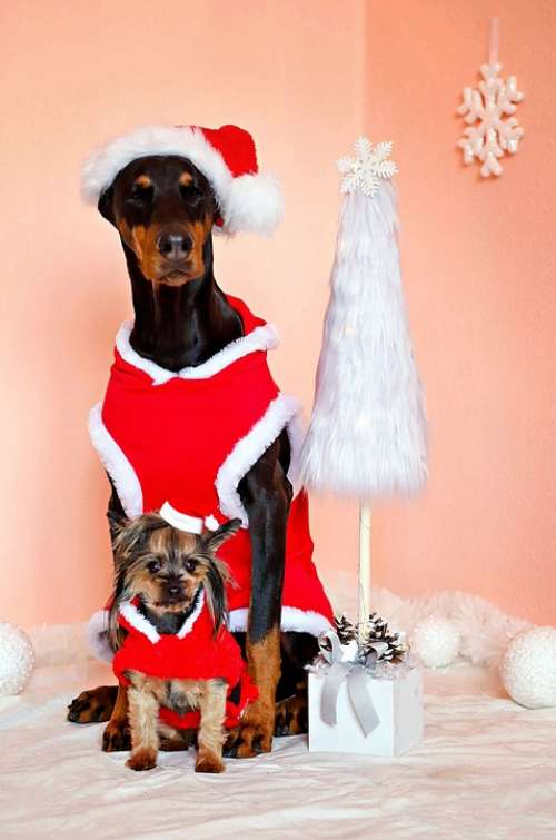 Doberman Yorkshire Terrier Dogs Santa Claus