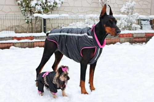 Doberman York Yorkie Dogs Friendship Animal Snow