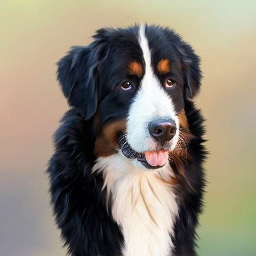 Dog Bernese Mountain Dog Senner Dog Pet Good