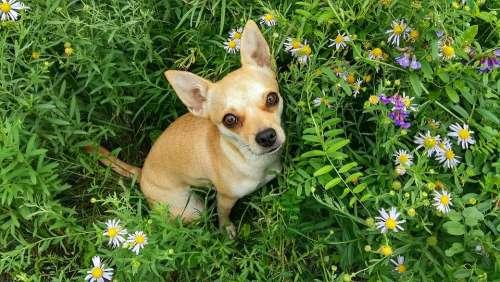 Dog Grass Summer Meadow Flowers Puppy Cute