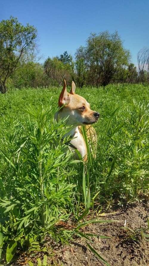Dog Meadow Field Summer Nature Air Grass Puppy