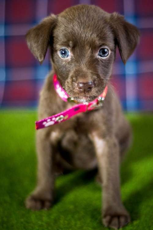 Dog Adoption Puppy Animal Pet Animals Muzzle