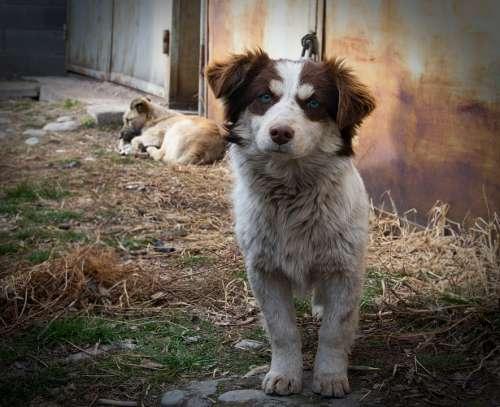 Dog Street Animals Animal City