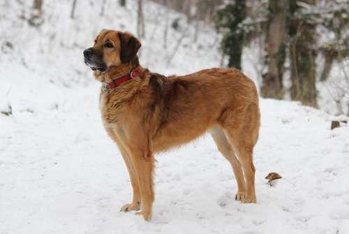Dog Animal Winter Walk Snow Park Nature Outdoor