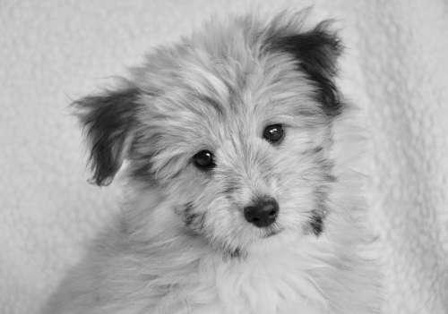 Dog Pup Small Dog